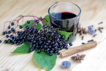 Study: Elderberries Block Flu Virus From Attaching To and Entering Human Cells