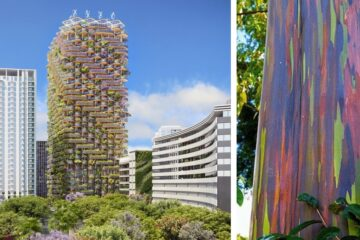 Architects Design Eco-Friendly Building Inspired by Rainbow Eucalyptus Trees