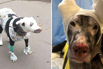 Hero Dog Saves 4 Patients from Hospice Inferno after Running into the Building to Raise Alarm