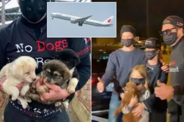 34 Chinese Puppies Rescued from Canine Meat Trade on a Flight for China