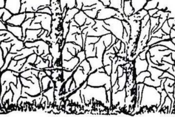 Can You Solve It: How many Animals Do You See?
