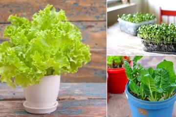 5 Yummy Veggies You can Harvest Indoors the whole Year Round