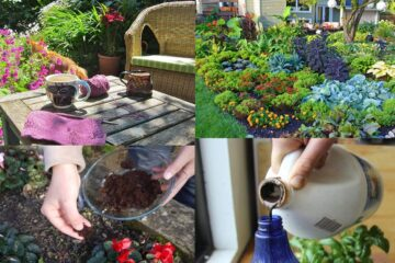 10 Amazing Uses of Coffee for Worry-Free Gardening