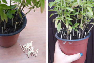 Here's Why You Should Put Match Sticks in the Soil of Your Plants