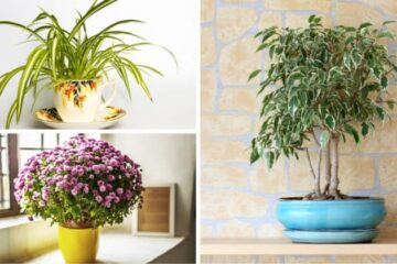 According to this Indian Study, these 5 Indoor Plants are the Best Air Purifiers