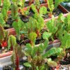 You can Grow Delicious & Healthy Swiss Chard in Pots; Here's How