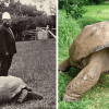 Meet Jonathan, the 187-Year-Old Tortoise & the Oldest Land Animal in the World