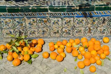 This How Seville in Spain Is Using Leftover Oranges to Produce Electricity