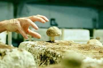 How Is Paris Turning Abandoned Parking Garages into Organic Mushroom Farms