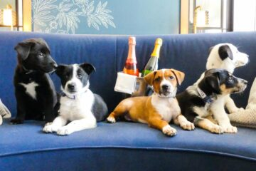This Hotel Helps Dogs Find Forever Homes by Giving Guests a Chance to Foster them during the Stay