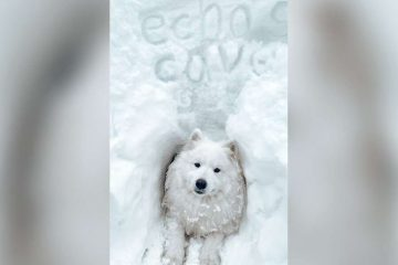 Snow-Obsessed Doggo Finds an Awesome Snow Cave & 'Moves in'