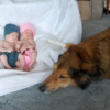 This Dog Who Was Rescued from a Trash Can Is the Loveliest Family Member Today