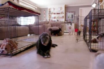 Couple Takes in 11,000 Dogs in their Home to Save them from Euthanasia