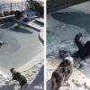 This Quick-Thinking Dad Saved a Dog that Fell into a Frozen Pool