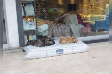 This Furniture Store Ensures Neighbourhood Dogs Have a Cozy Sleeping Area