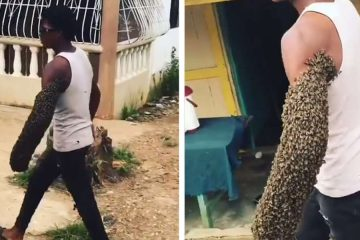Man Spotted casually Walking down a Street with His Arms Covered in Bees
