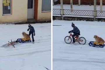 Boy Takes Out His Dog for the Sweetest Sled Ride ever