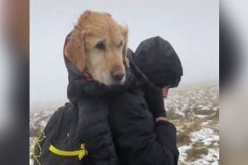 Brave Hikers Face Miles of Icy Mountain Trails to Bring Back Home a Stranded Dog