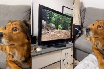 Sweet Dog 'Freaks' Out when She Sees Squirrels 'inside' the TV