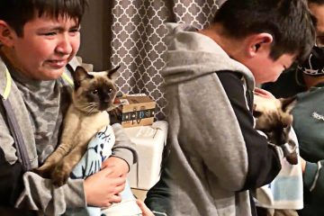 Boy Can't Contain Tears when He Reunites with His Lost Cat