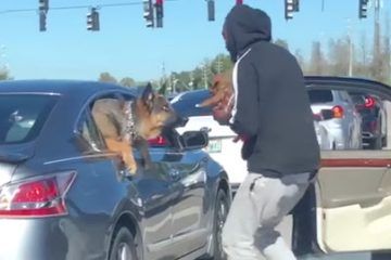 This Man Jumped Out of His Car with a Puppy to Say Hi to the Puppy in the Car Next to Them