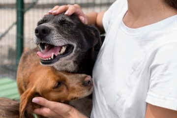 San Antonio Pet Stores Will soon Have to Sell only Pets from Shelters