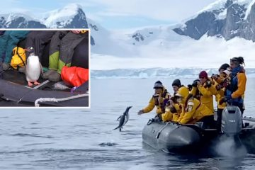 Penguin Escapes Whales by Leaping onto a Boat with Tourists