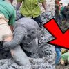Hero Locals Rescue 3 Elephants Trapped in Muddy Swamp
