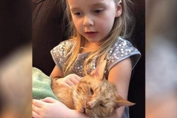 Little Girl Serenades Her Beloved Cat for one last Time before He Passed away