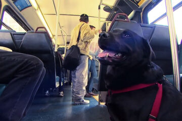 Every Day this Dog Rides the Bus by Herself to Visit the Park