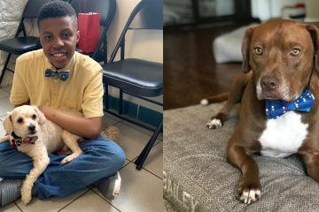 Amazing Teen Makes Tiny Bow Ties for Shelter Dogs to Help Them Get Adopted