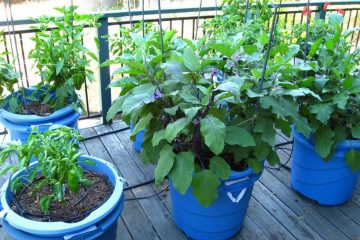 5 Awesome Veggies You can Easily Grow in Containers