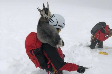 Adventurous Goat Stuck on a Snowy Mountain Was so Happy to See Her Rescuers