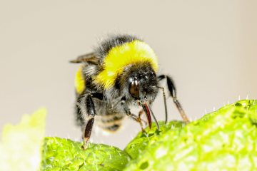 Bees Bite Plants to Speed Up Their Flowering, Say Surprised Scientists