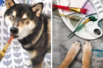 Heartwarming: Owners Teach their Shiba Inu to Paint so that they can Communicate