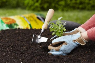 Gardening just twice a Week Improves Wellbeing & Reduces Stress, Finds New Study