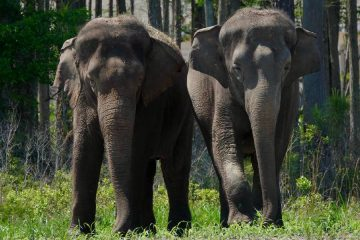 35 Circus Elephants Arrive at Florida Sanctuary to Retire among Forest, Grassland & Water
