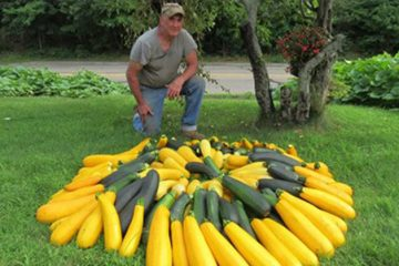 Man Transforms a Traffic Island into a Garden to Grow Food for the Homeless