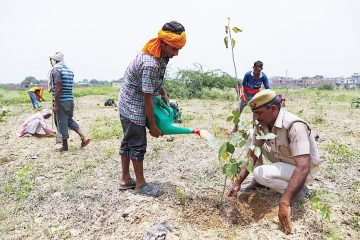 India's Doing it again: They Plant 250 Million Saplings as Part of their Reforesting Campaign