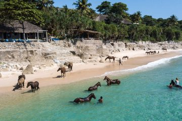 Once-in-a-Lifetime Experience: You can Do Yoga with Horses on Indonesian Beaches