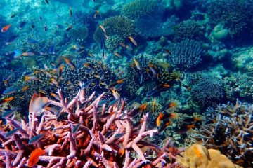Thailand Announces Ban on Coral-Destructing Sunscreens in Marine National Parks