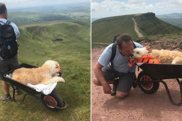 Man Takes Dying Dog for One Last Walk Up the Mountain Carrying It in a Wheelbarrow