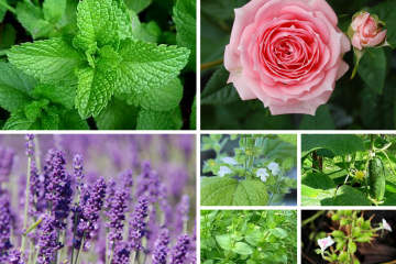 The Best Cooling Herbs to Enjoy in Late Summer