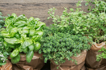 5 Must-Have Herbs for Your Fall Garden to Thrive