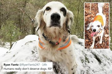 Heroic Dog Dies Protecting His Owner & Dog Friends from a Bear