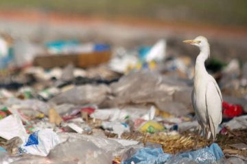 Canada Declares Plastics Toxic & Opens the Way for Its Restrictions