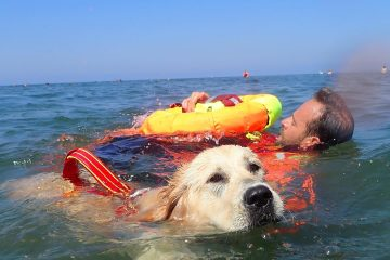 On Italian Beaches, these Highly-Trained Lifeguard Dogs Save Swimmers in Trouble