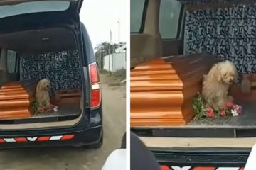 Faithful Dog Refuses to Leave Owner's Side as She's Laid to Rest