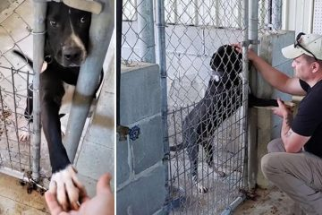 Shelter Dog Desperate for Love Tries to Hold Hands with Everyone Who Passes by His Kennel